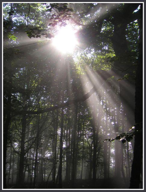 Bosque---> Luz-en-el-bosque-640x640x80