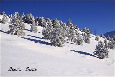 Blanca navidad....