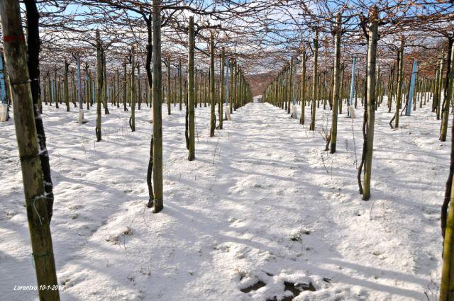Nieve en Getaria