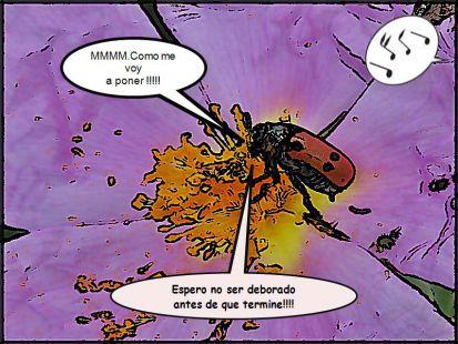 insecto en peligro
