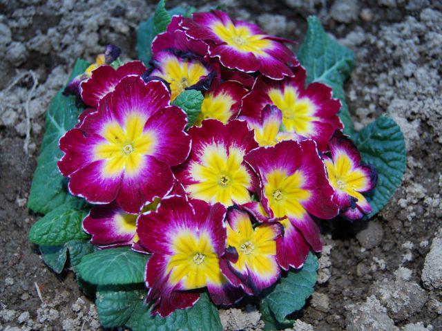 Tipos de flores y su significado for Tipos de arboles y su significado