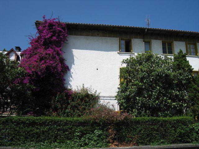 Casa en zarautz fotos de plantas y flores - Apartamentos en zarauz ...