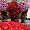 flores alemanas