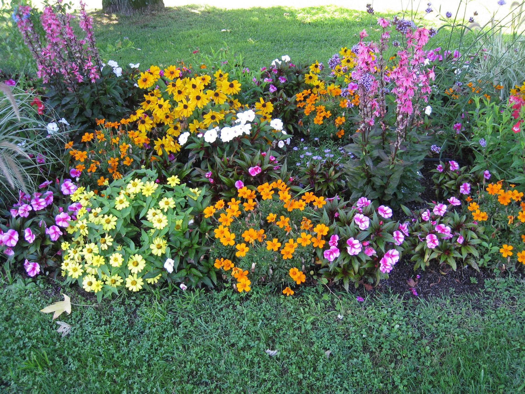 Jardin fotos de plantas y flores for Plantas y jardines fotos