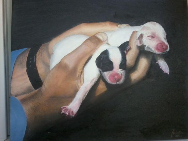Perritos recien nacidos