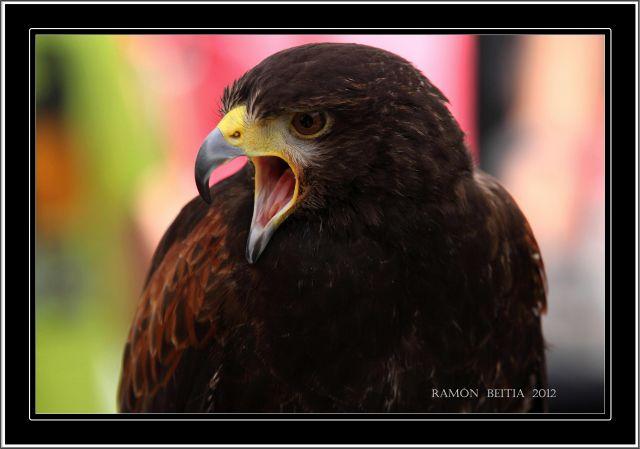 Aves 2012