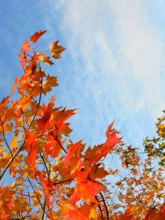 hojas y cielo
