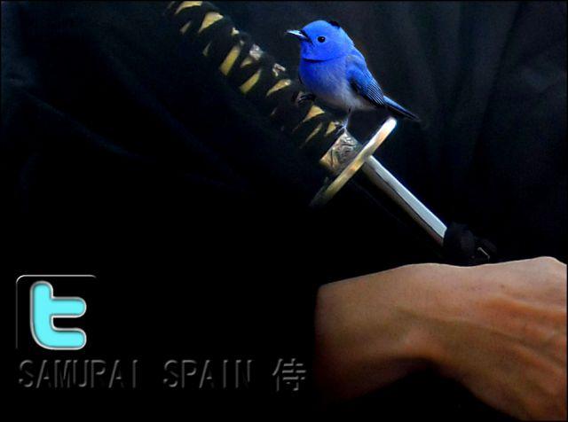 twitter  Samurai spain