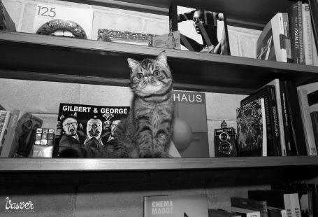 vasver fotografia en donostia san sebastian  presenta a Campeon gato persa exotico