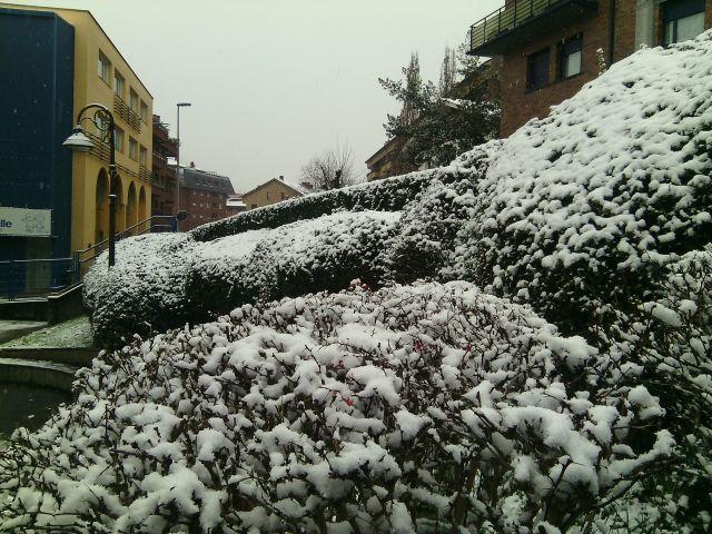 Blancos arbustos en beasain