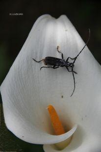 DEBA.Cala y Escarabajo