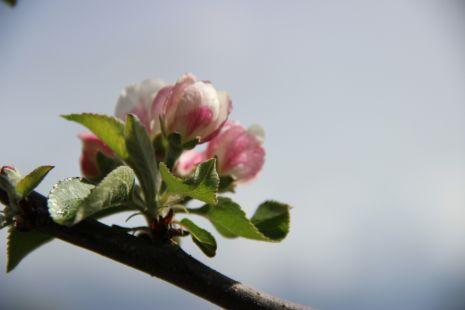 Olor primaveral