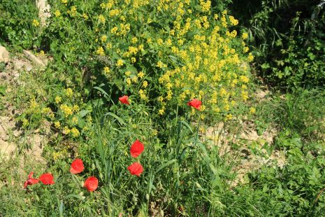 Flora variada