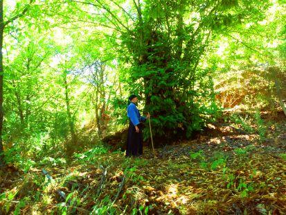 Shinrin-yoku Forest Bathig