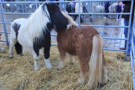 Soro Feria.Ponys.Deba.2016-01-02