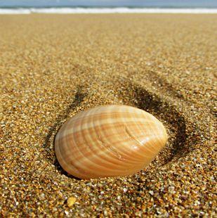 la conha en la playa zarautz
