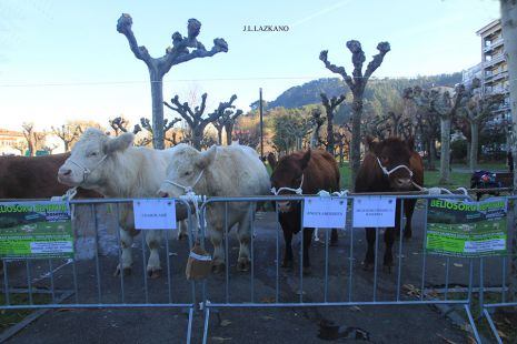 Urte Berriko Feria.Charolaise.Deba.2017-01-07